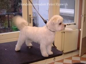 puppymodel maltzer